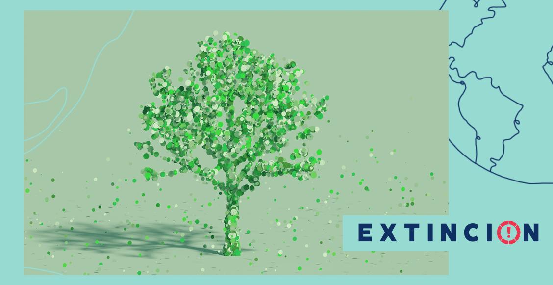 extincion-tipos-sustentabilidades-debil-fuerte-radical