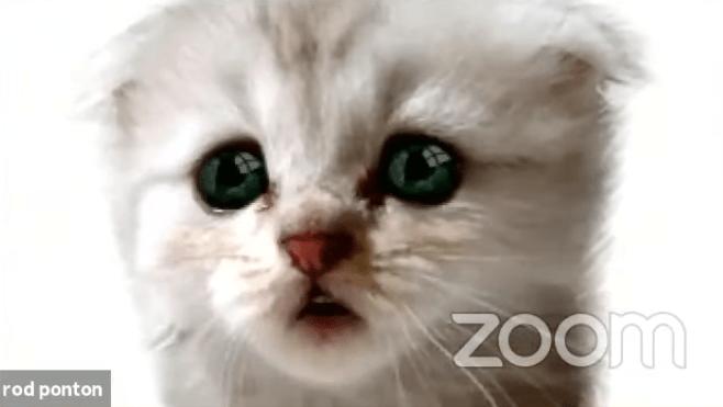 filtro-gato-zoom