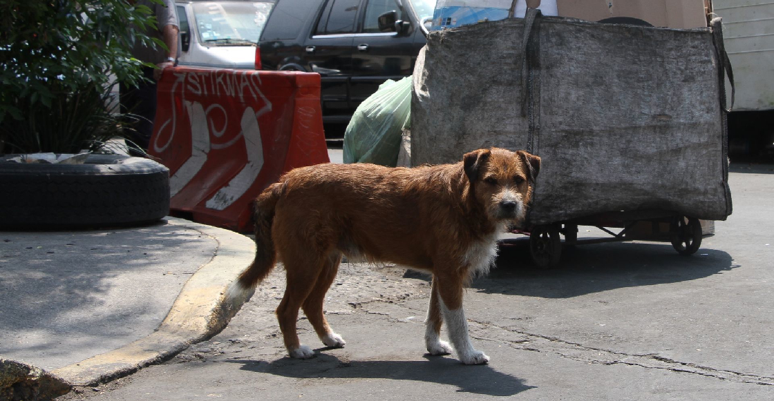 """Mi México: Golpean a rescatista que quería ayudar a un perrito y policías le dicen que """"él se lo buscó"""""""