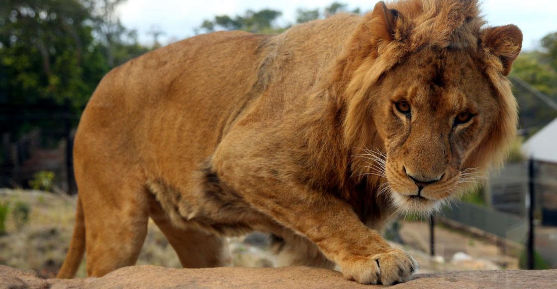 leon-cadaver-iztapalapa