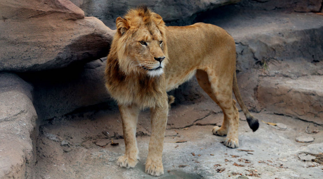 leon-iztapalapa