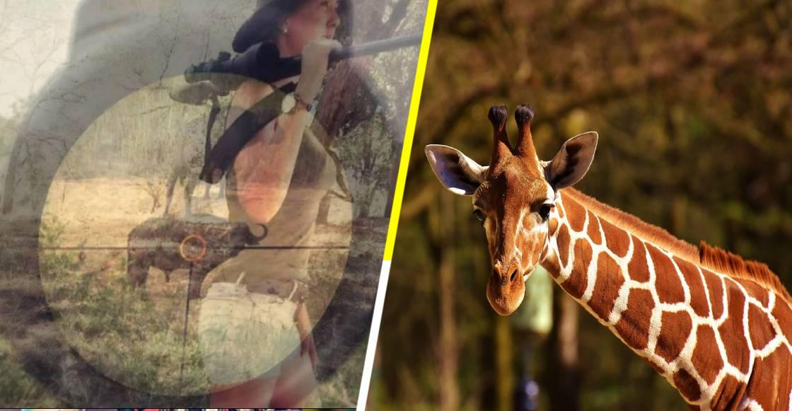¡WTF! Mujer cazó a una jirafa y presume el corazón (que a ella le falta)