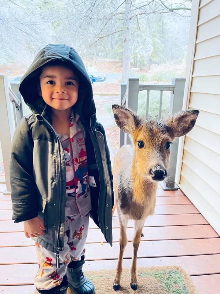 Niño sale a pasear por el bosque y regresa a casa con un ciervo bebé