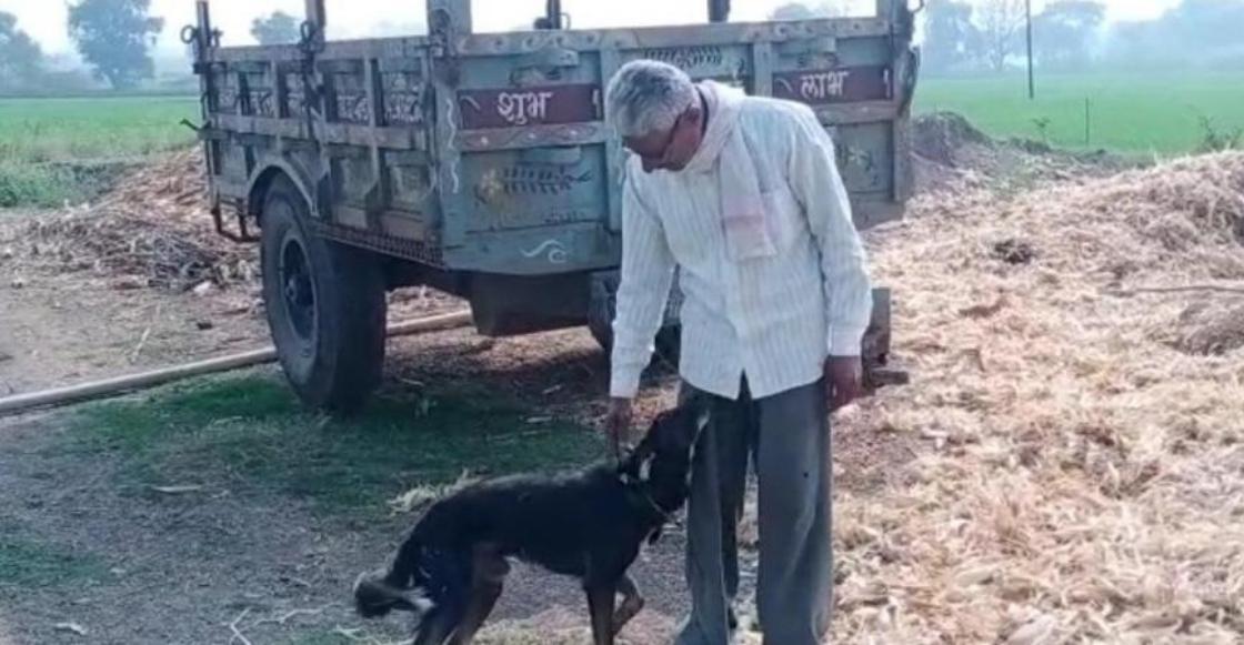 Heredero peludo: Hombre le quita la herencia a sus hijos y se la deja a su perrito
