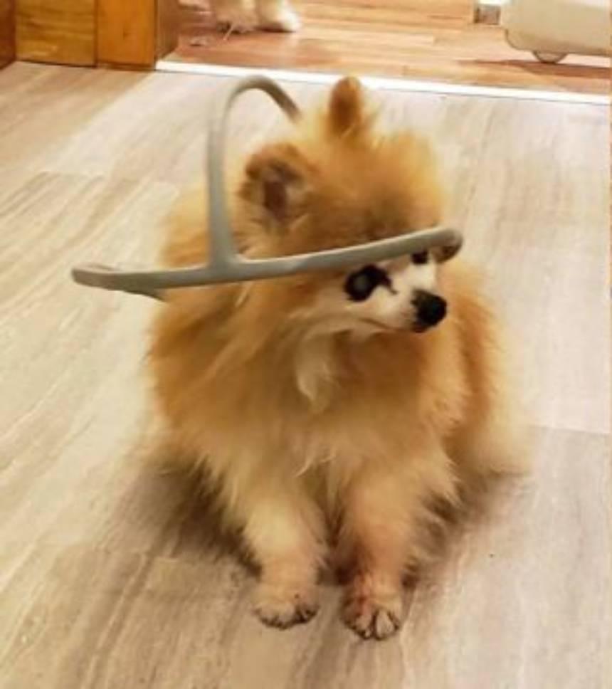 ¡Guau! Un dispositivo en impresión 3D, se vuelve 'la guía' de un perro ciego
