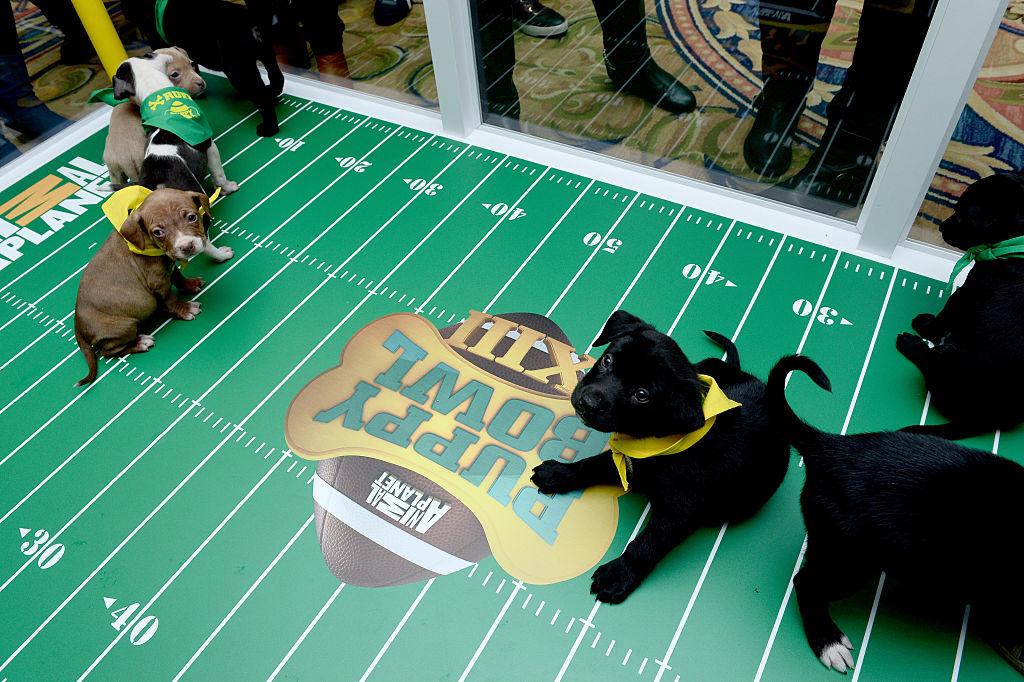 'Puppy Bowl', el Super Bowl entre perritos que buscan ser adoptados