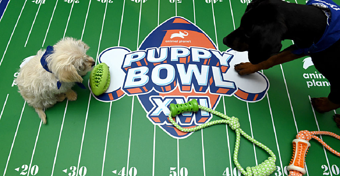 'Puppy Bowl', el Super Bowl entre perritos que buscan ser ...