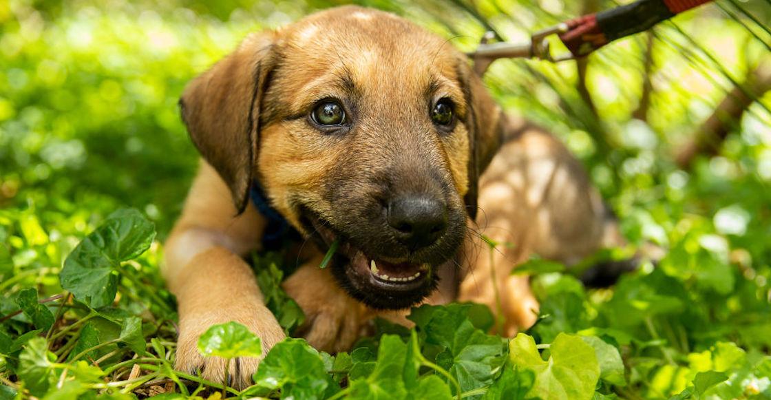 101-cachorros-rescatados