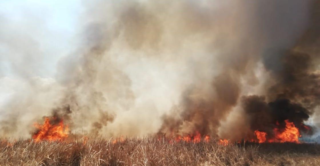 cdmx-incendios-forestales