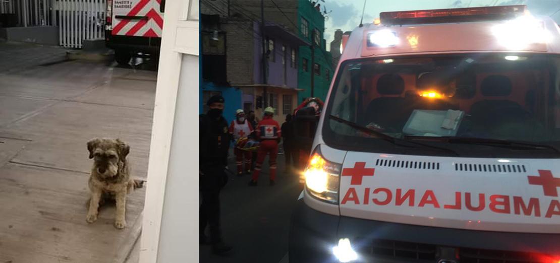 Juan, el perrito que acompañó a su dueño en ambulancia