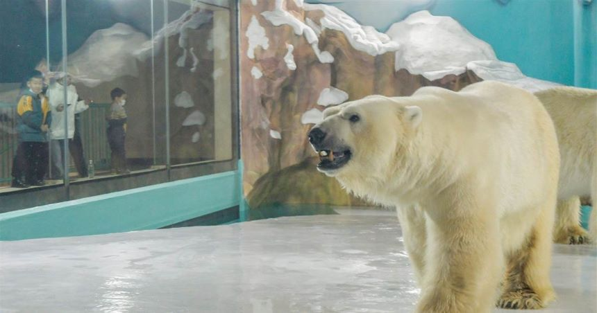 WTF! China estrena hotel con osos polares dentro de las habitaciones