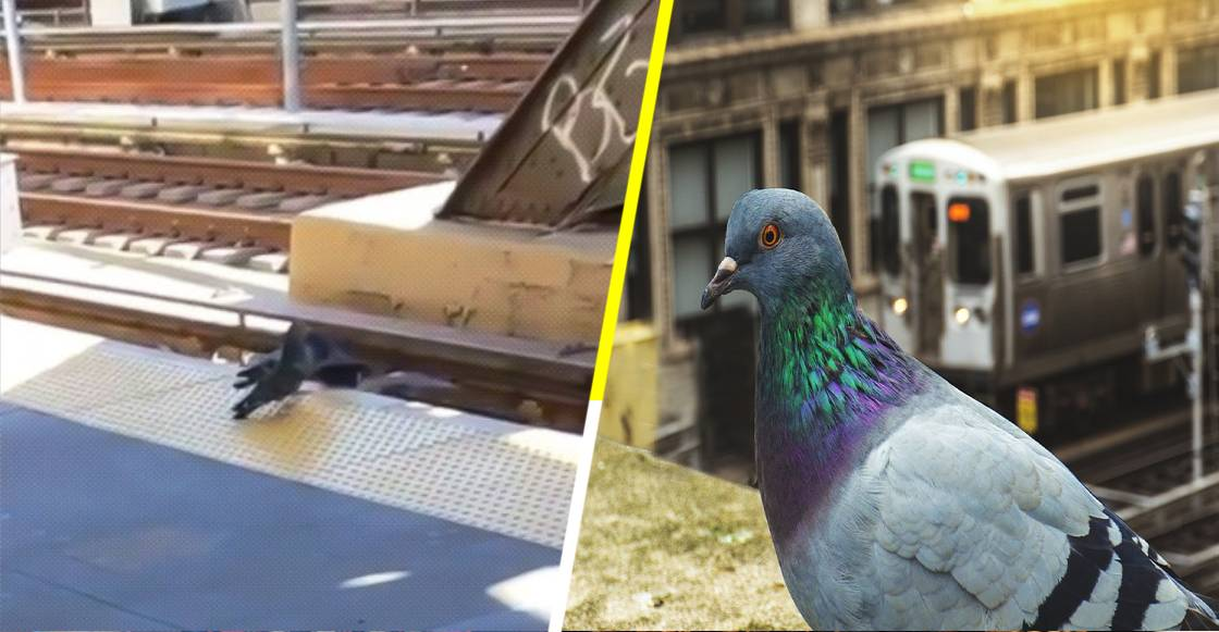 Palomas asesinan a su compañera discapacitada, arrojándola a las vías del metro