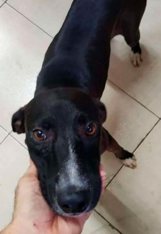 Sniff: Perrito callejero entra a una veterinaria para pedir ayuda
