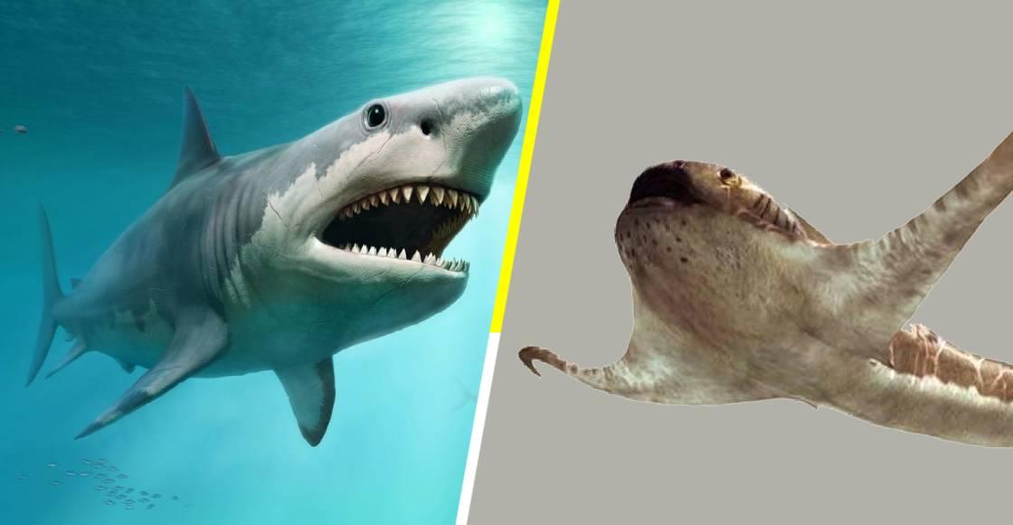 Descubren en México fósil de un inusual tiburón 'alado' del periodo cretácico