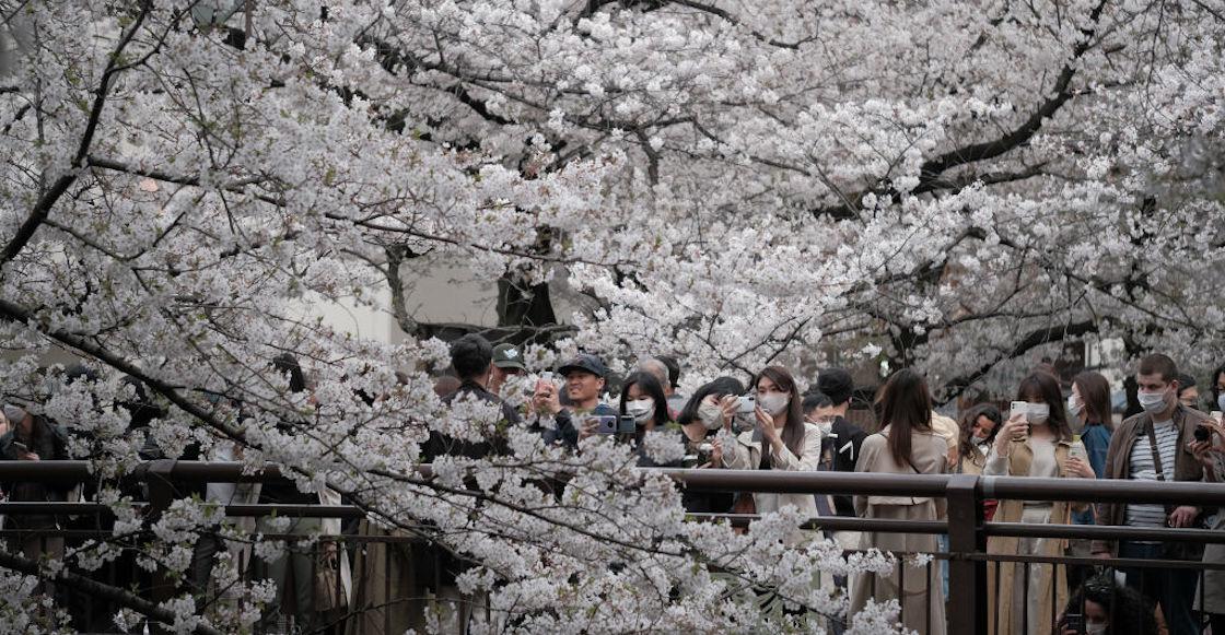 Ya florecieron los cerezos en Japón… pero es una pésima señal climática thumbnail