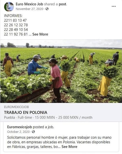 przykład-meksykan-polska-fałszywe-oferty-pracy-02