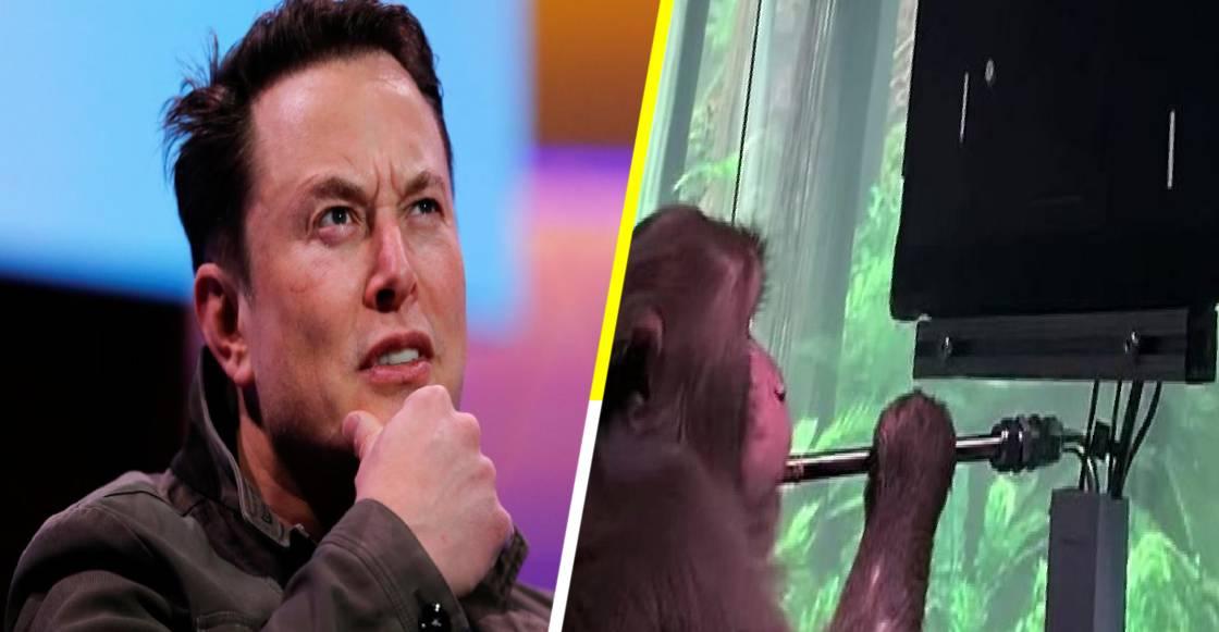 Elon Musk logra que un mono controle un videojuego solo con la mente