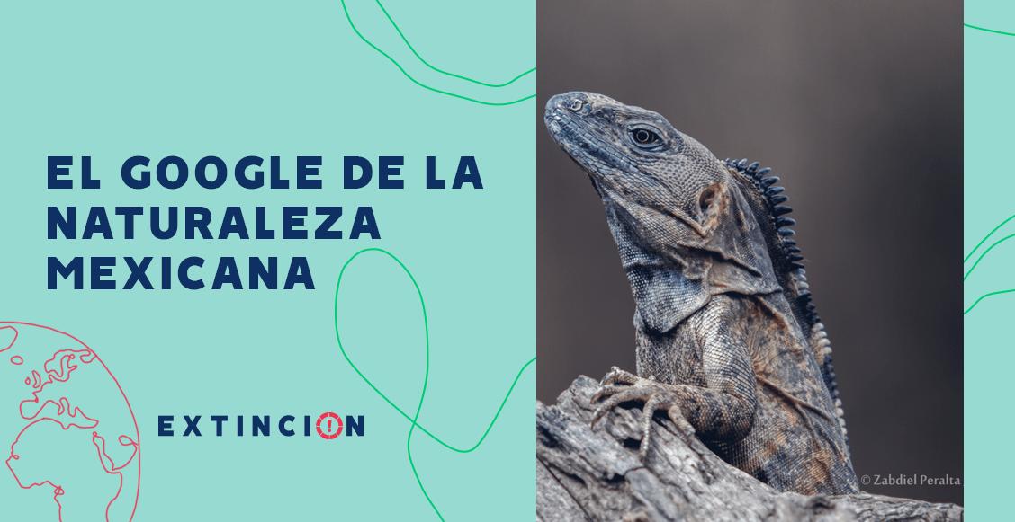 extincion-conabio-google-naturaleza-mexicana-03
