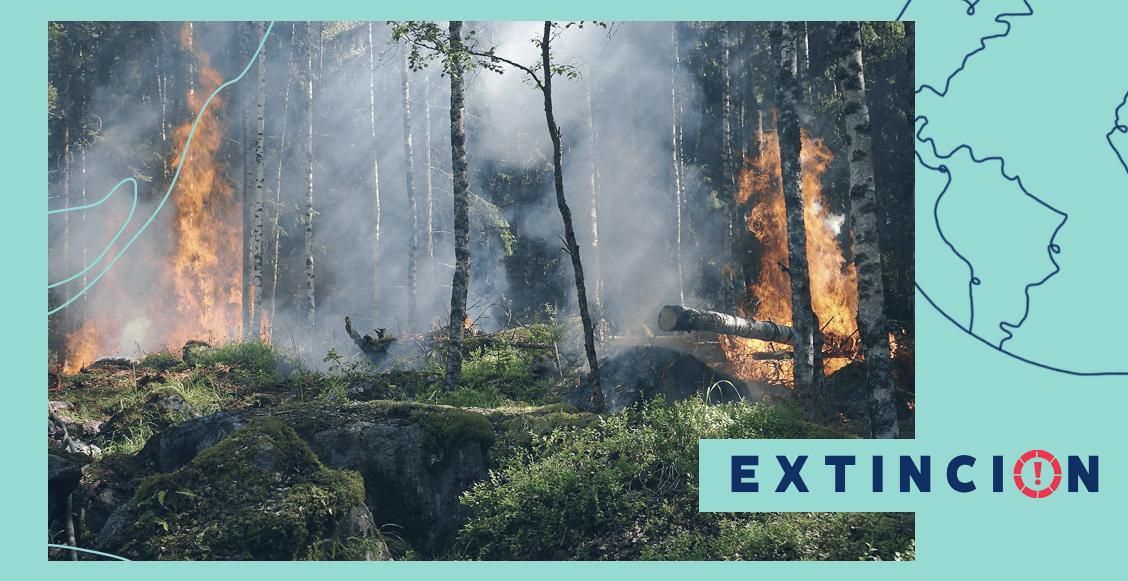 extincion-el-fuego-es-vida
