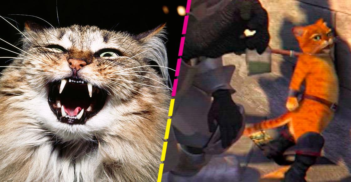 gato-droga-carcel-panama