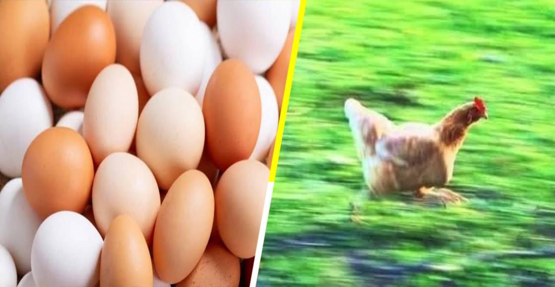 Granja es obligada a donar 1.2 millones de huevos por subir los precios durante la pandemia