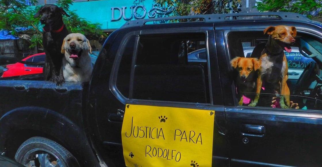 justicia-para-rodolfo-justiciapararodolfo-perrito-callejero-mochis-machete-sinaloa-manifestacion-02