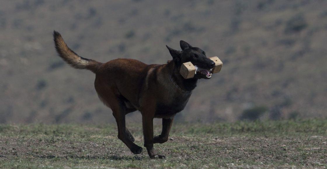 perrito-tonelada-cocaina-aeropuerto-cdmx-binomio-canino