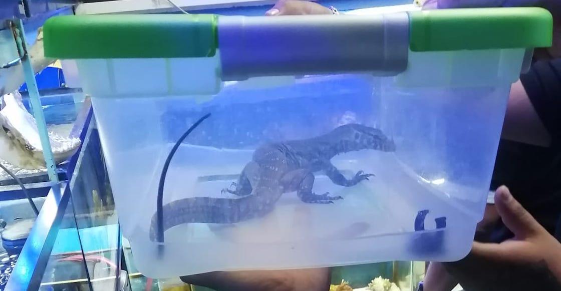 rescatan-animales-exoticos-mercado-venustiano-carranza