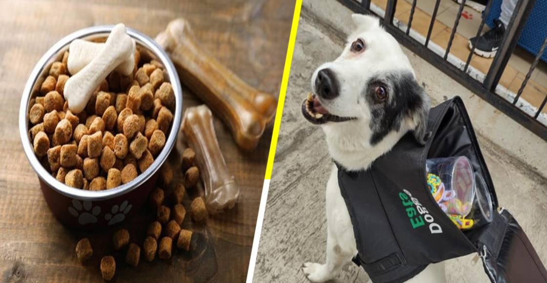 La emotiva historia de 'Any', la perrita repartidora que puede llevar comida hasta tu casa