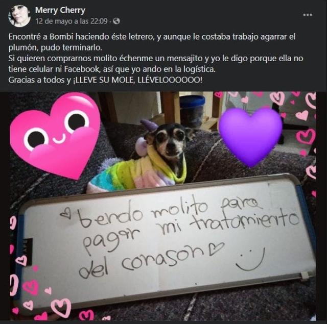 """Bombi: La perrita que """"vende"""" mole para pagar su tratamiento del corazón"""