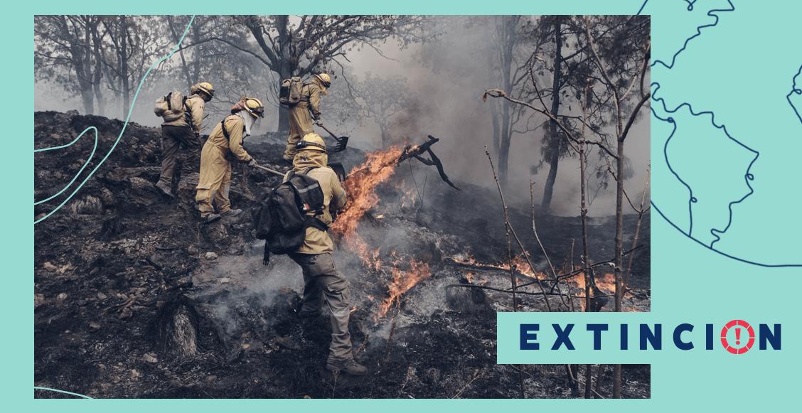 extincion-bosque-incendios-la-primavera-guadalajara