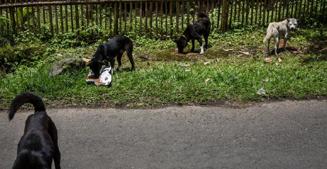 El abandono de mascotas aumentaría con el fin de la pandemia y acá te contamos la razón