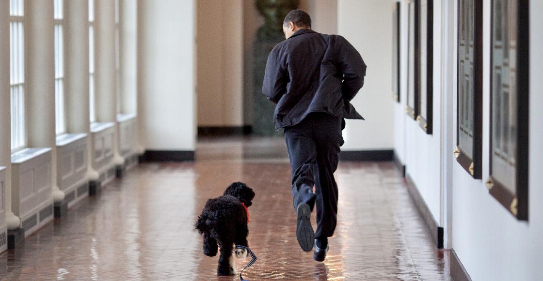 Murió Bo, el perrito de los Obama