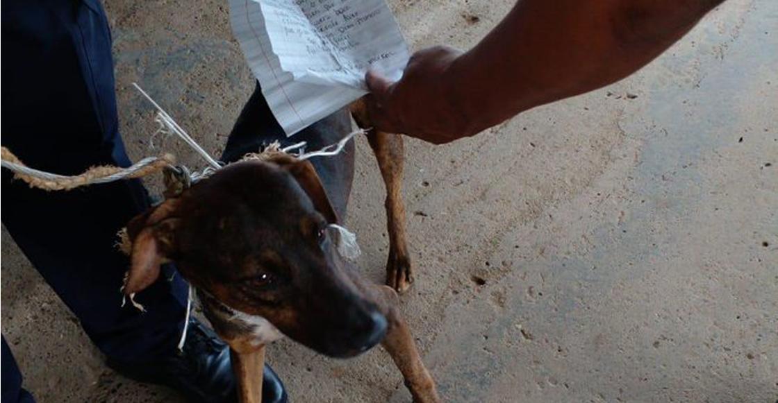 perro-mensajero-panamá