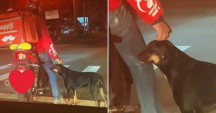 Repartidor se encariña con perrito callejero y termina adoptándolo