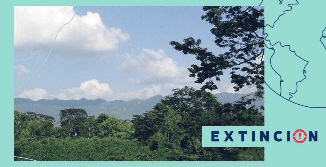 extincion-chimalapas-resistir-y-conservar-en-defensa-de-una-identidad