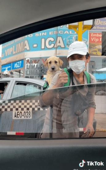 Awww: Joven sale a trabajar con su perrito en la espalda y se vuelve viral