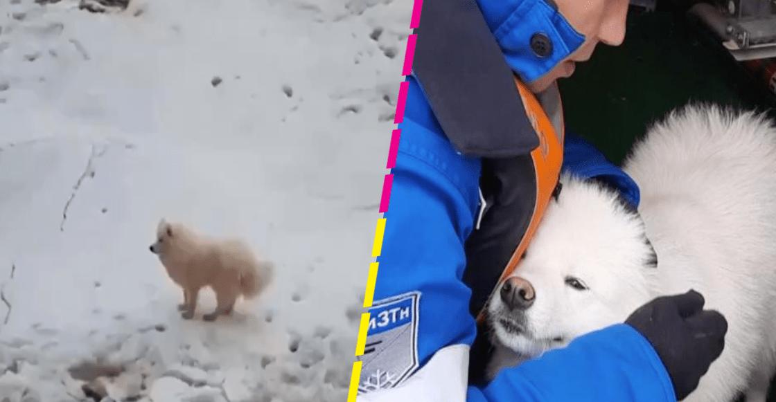 ¡Héroes sin capa! Marineros rusos rescatan a una perrita que estaba perdida en el Ártico