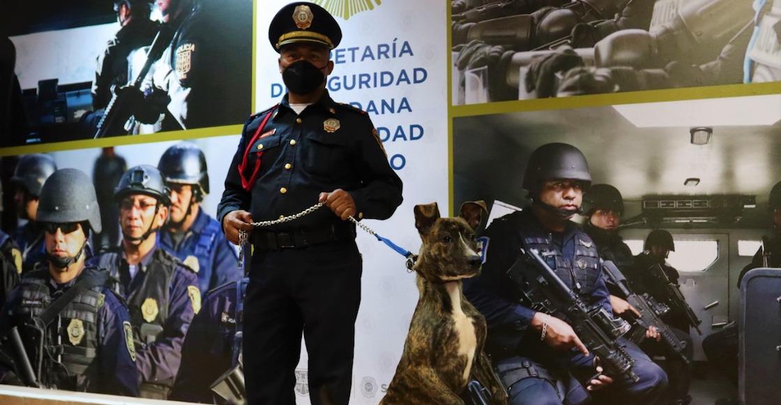 nombre-perrito-adoptado-policia-cdmx