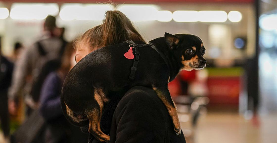 perros-viajes-estados-unidos-aeropuerto