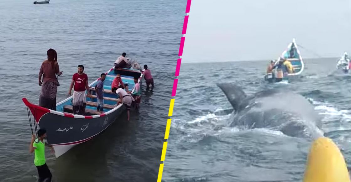 Pescadores encuentran 'tesoro millonario' en una ballena en Yemen