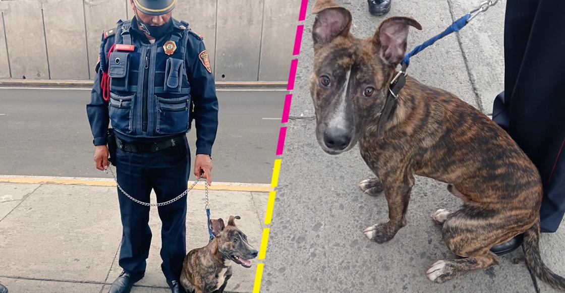 policia-adopta-perrito-cdmx