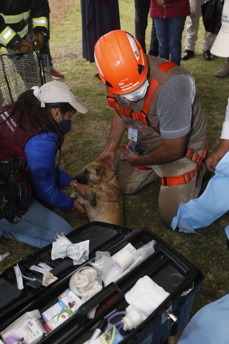 Perritos del socavón en Puebla fueron rescatados