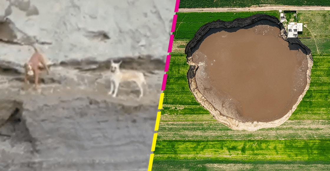 Video capta a perritos atrapados en socavón de Puebla: ¿Por qué no los han rescatado?