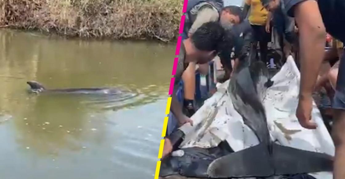 delfines-rescate-sinaloa-canal