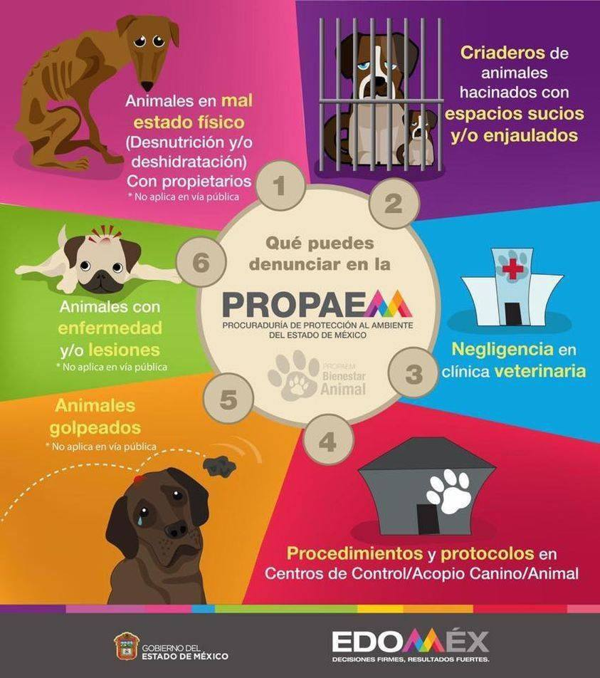 denuncia-propaem-estado-mexico