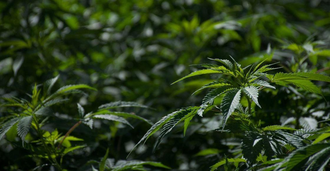 La Iglesia Católica considera que legalizar la marihuana nos haría esclavos de ella