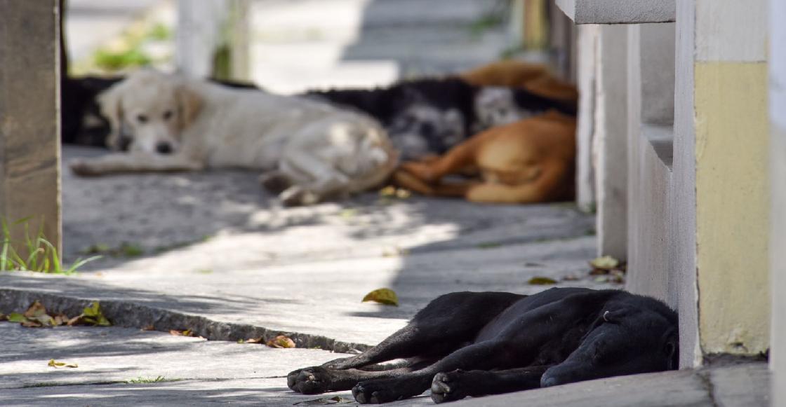 Denuncian envenenamiento de al menos ocho perros en Oaxaca