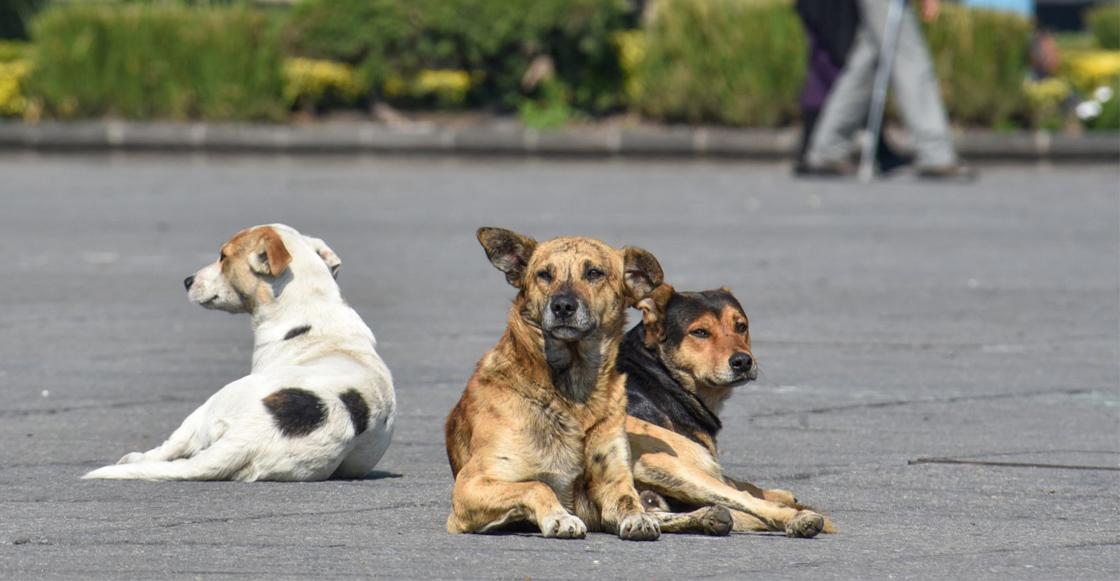 maltrato-animal-perros-calle