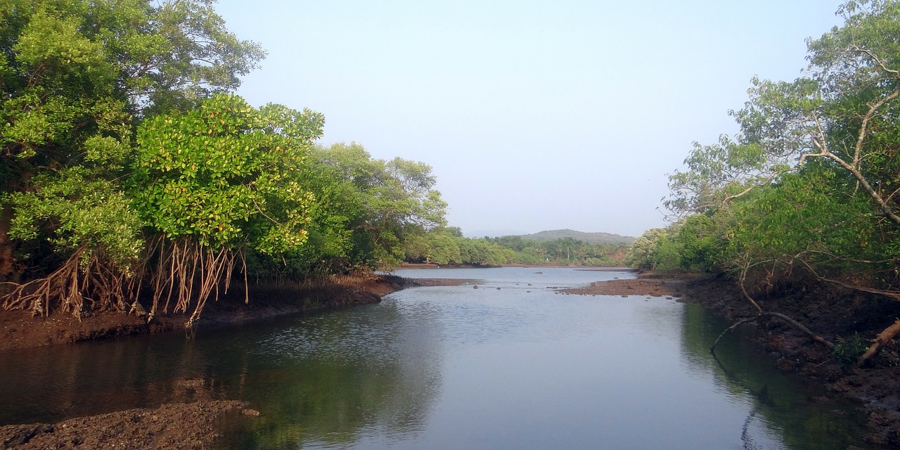 manglares-especies